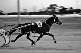 A night at the trots