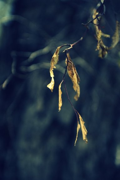 Tinder-dry