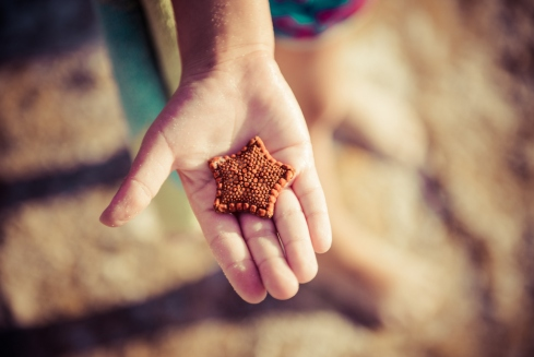 Biscuit Sea Star