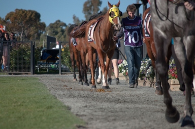 Prost, trained by Peter Fernie, in the mounting yard before the Hannans Handicap.