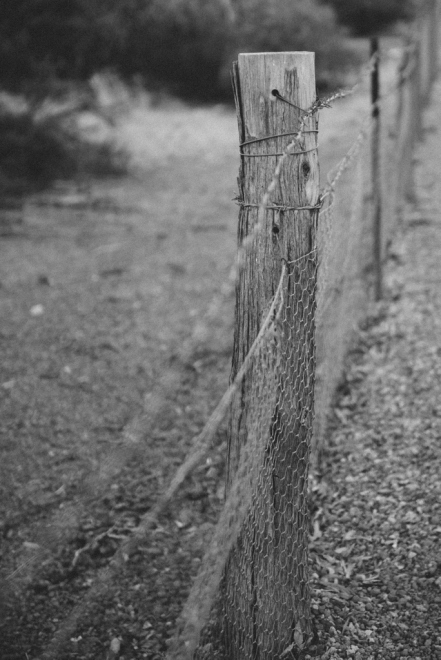 Along the Rabbit Proof Fence