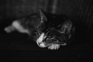 Desperation Cat